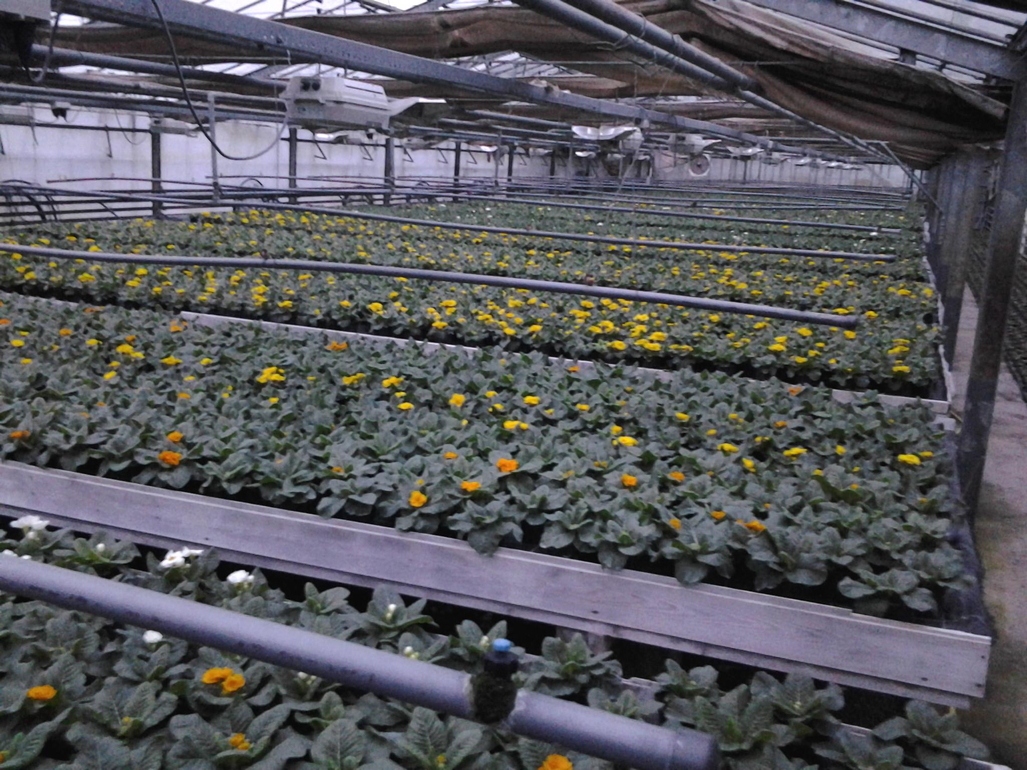Gartenbau Korschenbroich gartenbau lentzen